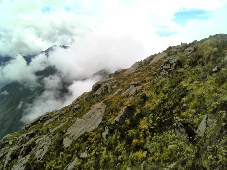 miltoniopsis-vexillaria-montanha