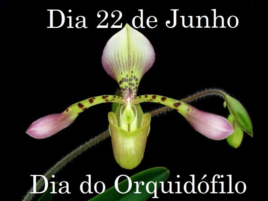 Resultado de imagem para dia do orquidofilo