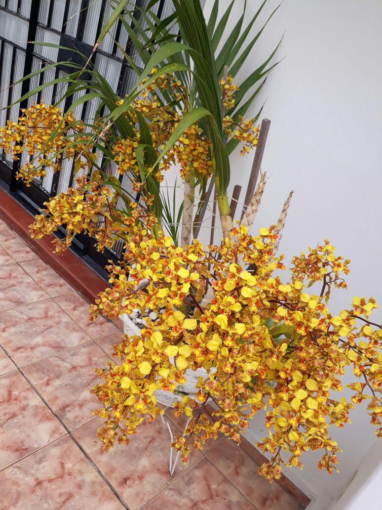 Cyrtopodium saintlegerianum - Juraci J Muraro Durigan - 1