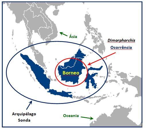 Dimorphorchis - Mapa JPG