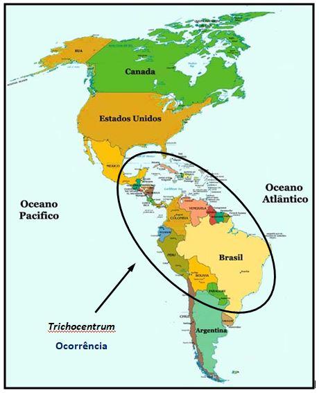 Trichocentrum ocorrencia JPG