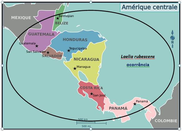 Laelia rubescens - Mapa JPG