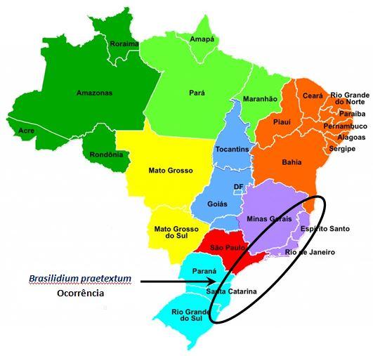 Brasilidium praetextum-ocorrencia JPG
