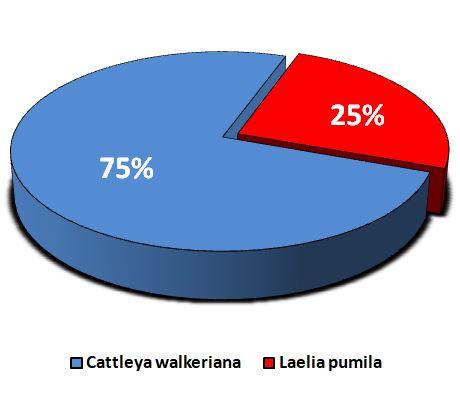 Lc Aloha Case - grafico pizza JPG