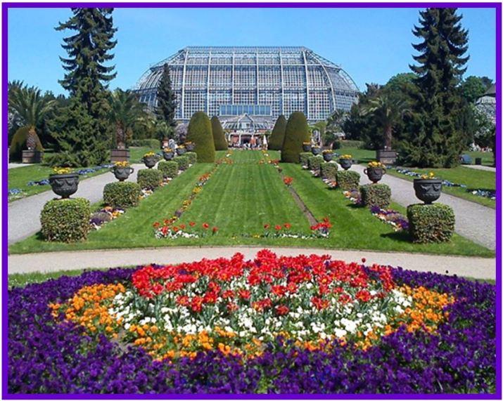 Restrepia brachypus - Jardim Botânico de Berlim JPG