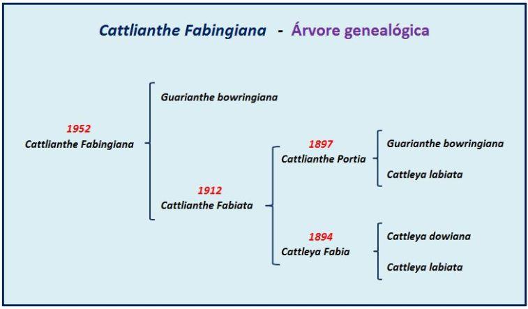 Cattlianthe Fabingiana - arvore JPG