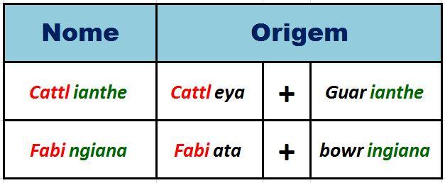 Cattlianthe Fabingiana - etimologia JPG