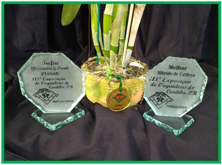 Cattlianthe Fabingiana - trofeus JPG