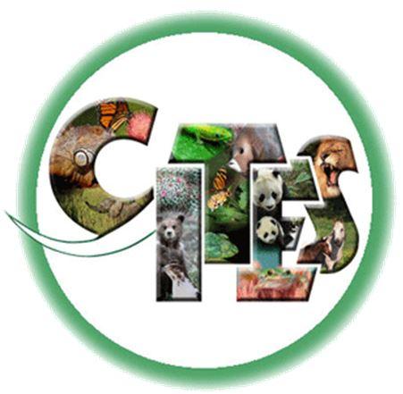 Coelogyne trinervis - CITES JPG
