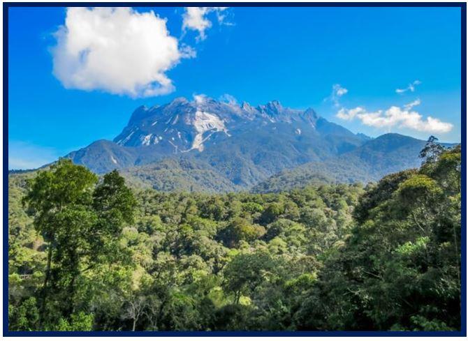 Coelogyne trinervis - Mount Kinabalu JPG