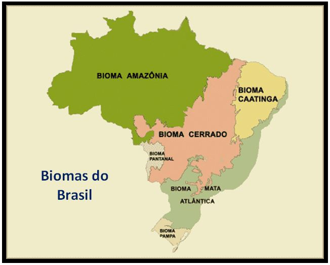 Encyclia patens - Biomas do Brasil JPG
