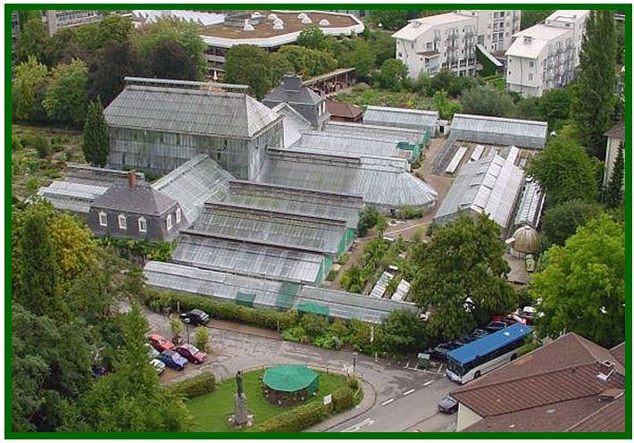 Chelonistele sulphurea - Jardim Botanico Heidelberg JPG