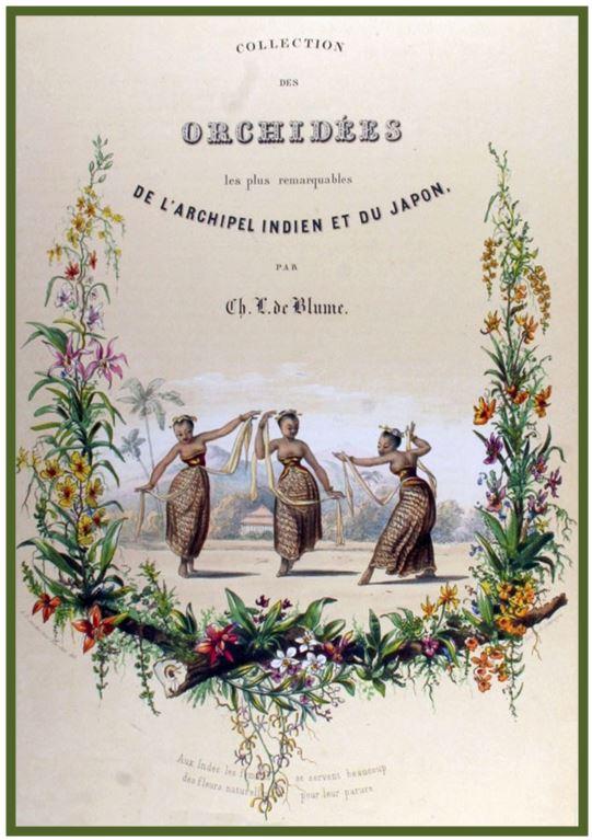 Chelonistele sulphurea - livro Blume JPG