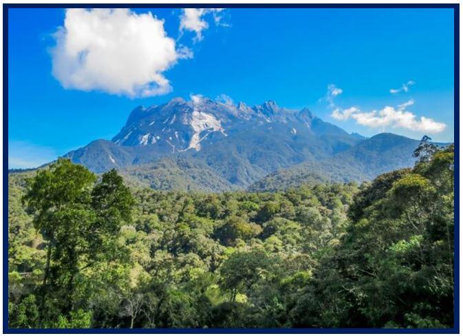 Coelogyne graminifolia - Mount Kinabalu JPG