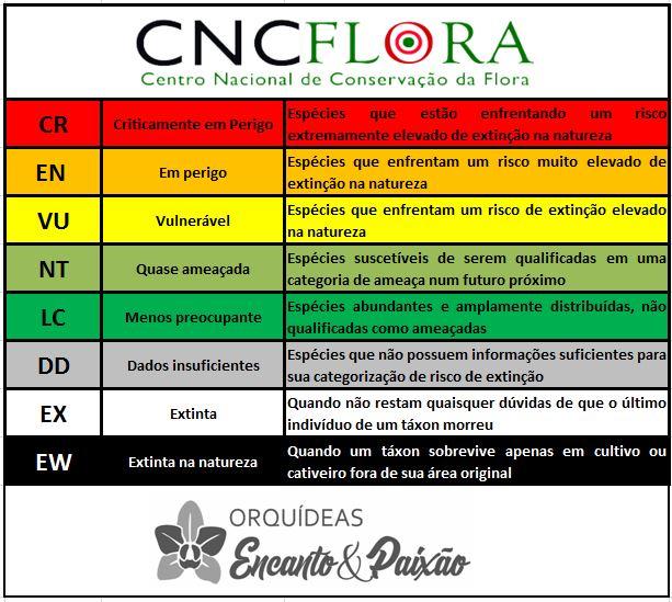 Cattleya schilleriana - CNCFlora JPG