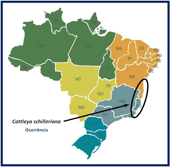 Cattleya schilleriana - ocorrencia especie JPG