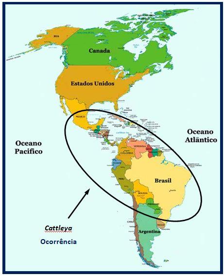 Cattleya schilleriana - ocorrencia genero JPG