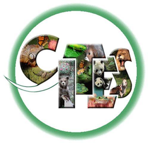 Odontoglossum krameri - CITES JPG
