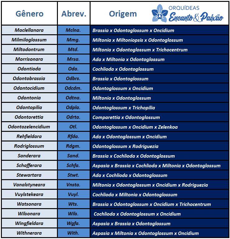 Odontoglossum krameri - hibridos lista PARTE 2