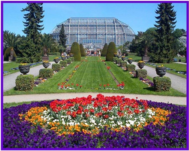 Odontoglossum krameri - Jardim Botânico de Berlim JPG