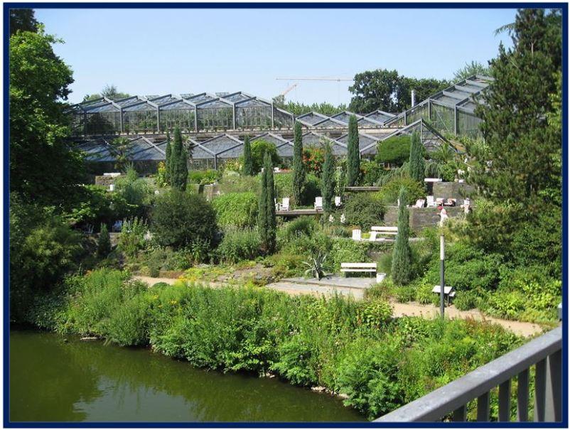 Odontoglossum krameri - Jardim Botânico de Hamburgo JPG