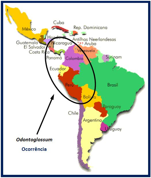Odontoglossum krameri - ocorrencia do genero JPG
