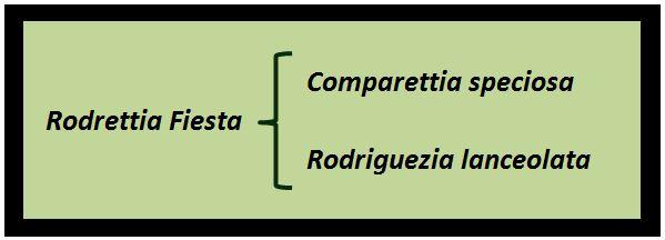 Rodriguezia pardina - Arvores 1