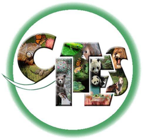 Rodriguezia pardina - CITES JPG