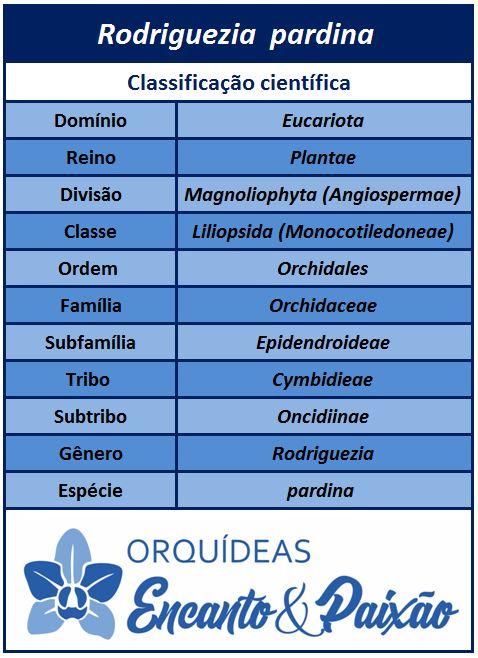 Rodriguezia pardina - classificação JPG
