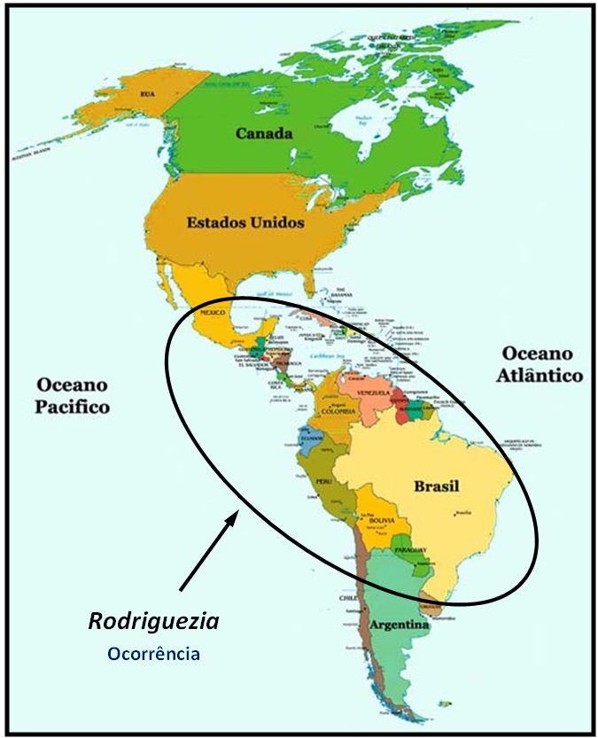 Rodriguezia pardina - ocorrencia do genero JPG