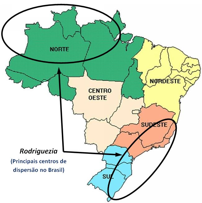 Rodriguezia pardina - ocorrencia do genero no BRASIL JPG
