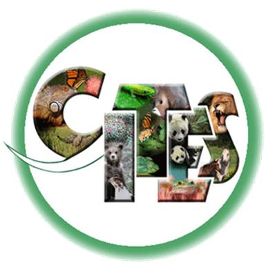 Angraecum didieri - CITES JPG