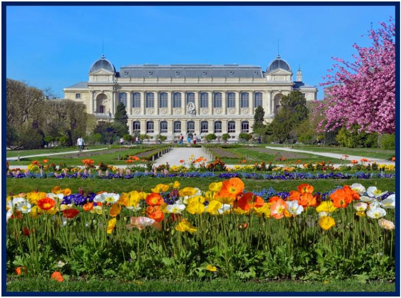 Angraecum didieri - Jardim Botânico de Paris JPG