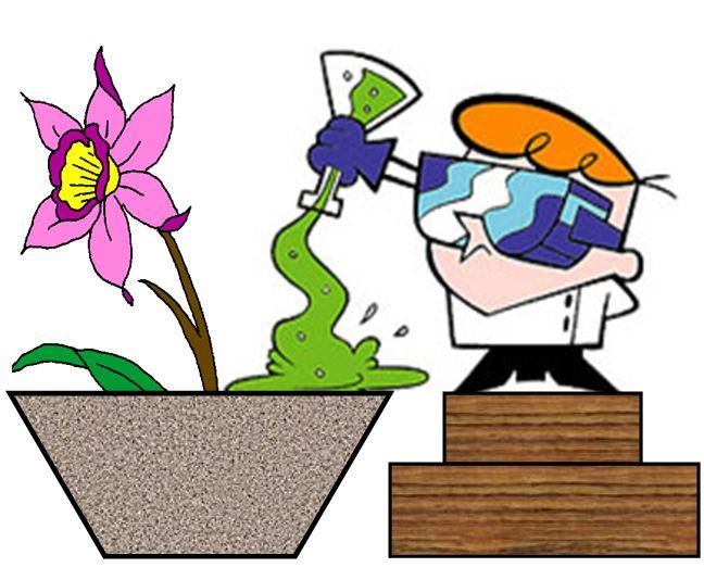 Bulbophyllum nymphopolitanum - cientista JPG