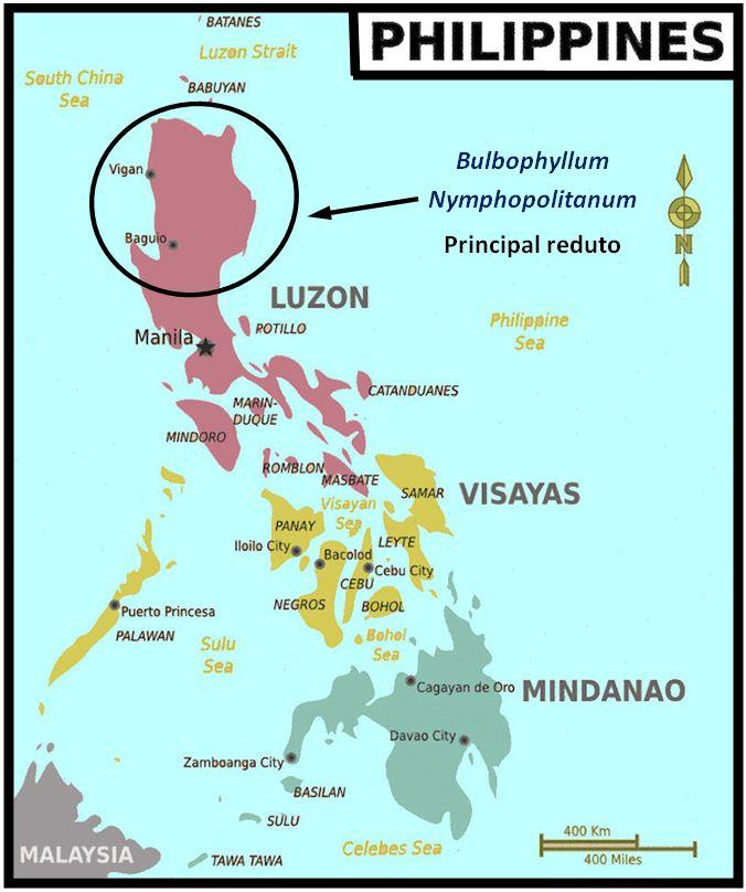 Bulbophyllum nymphopolitanum - Luzon JPG