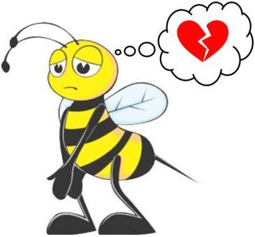 Stanhopea tigrina - abelha triste JPG
